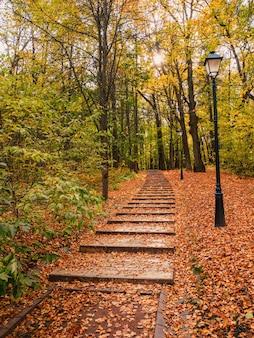 Percorso ecologico verde vuoto in autunno, vista dal basso verso l'alto. foglie rosse cadute sul sentiero. mosca