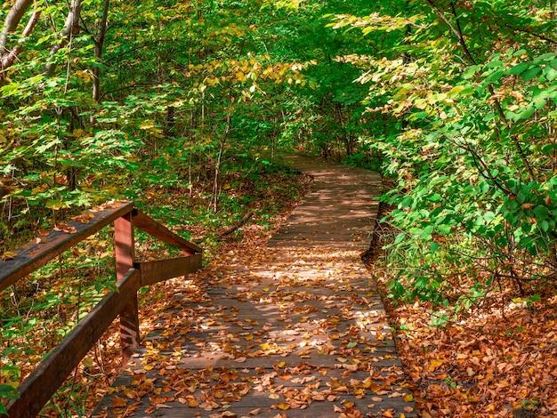 Percorso ecologico verde vuoto in autunno, vista dall'alto verso il basso mosca