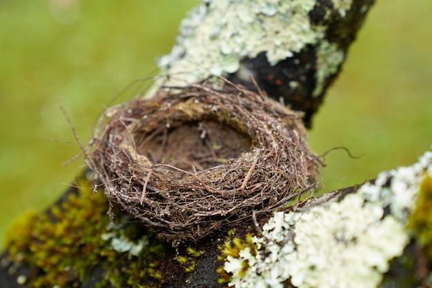 Nido di uccello piccolo naturale vuoto nel ramo di un albero Foto Premium