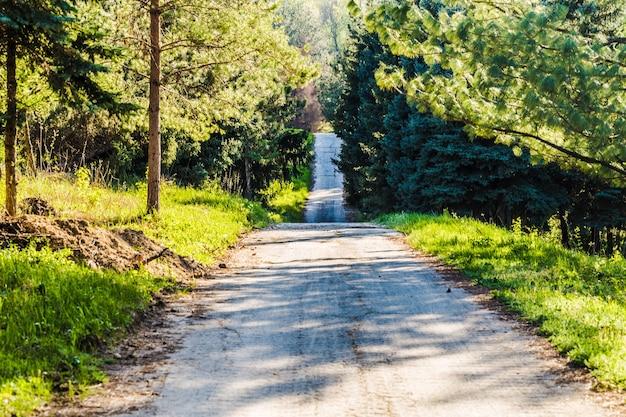 Strada vuota che va in lontananza in un parco verde