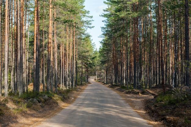 Strada vuota in una pineta. giorno soleggiato