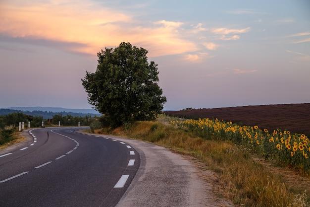 Strada vuota al tramonto lungo i campi di lavanda nel comune di valensole provence france