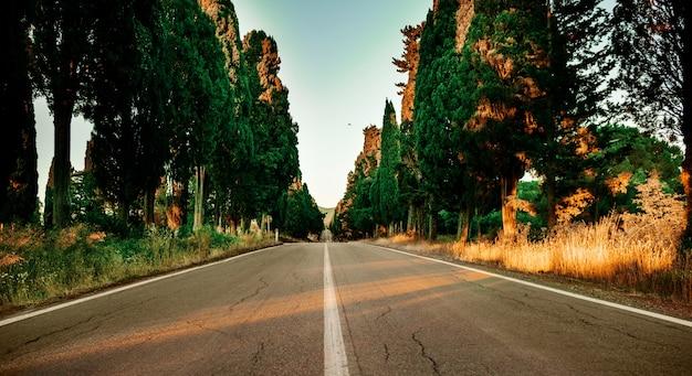 Carreggiata vuota con alberi sempreverdi a bolgheri in italia. la bellezza della natura. sfondo autunno.