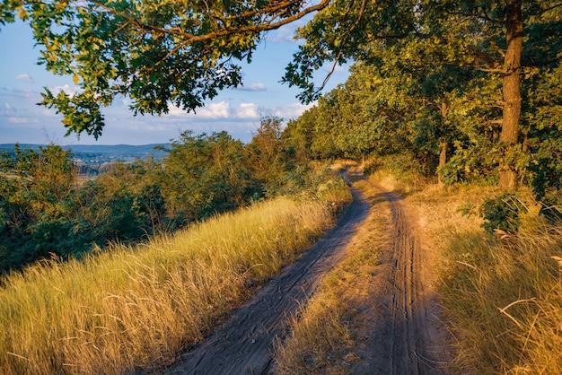 Strada rurale vuota attraverso la foresta con erba secca e alberi verdi