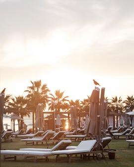 Sedie a sdraio vuote al tramonto in un resort tropicale in viaggio e concetto di vacanza tacchino