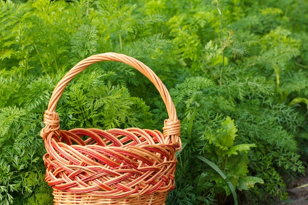 Cestino di vimini vuoto con pianta verde che cresce su un letto da giardino sullo sfondo.