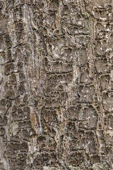 Struttura di legno vuota albero di colore marrone scuro corteccia di albero ruvido si chiuda con lo spazio della copia