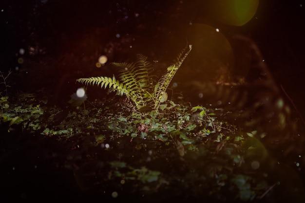 Bosco incantato, felci magiche. piante di streghe verdi, fondo mistico del bosco, fiori di prato