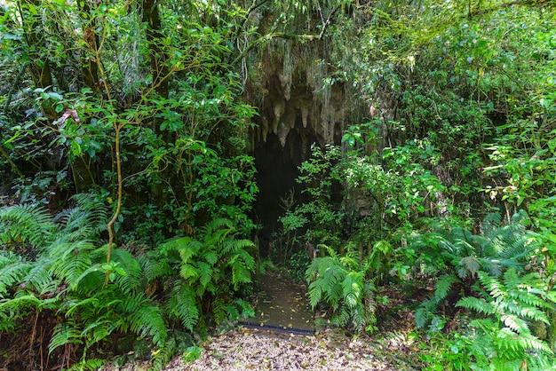 L'ingresso di stalattiti e stalagmiti nella grotta di waitomo, isola del nord della nuova zelanda