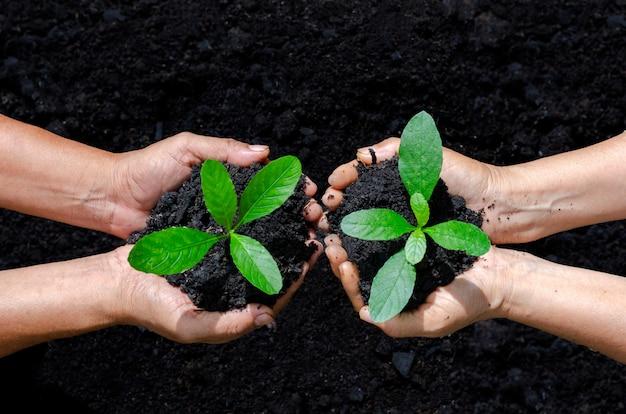 Ambiente earth day nelle mani di alberi che crescono piantine