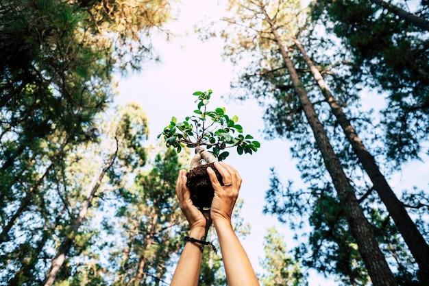 Ambiente e salvare il pianeta facendo crescere un concetto di albero con un paio di mani umane che mostrano un piccolo albero con foresta naturale intorno - celebrazione della giornata della terra per il futuro
