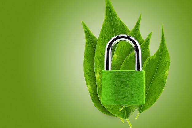 Concetto di protezione ambientale. un lucchetto di colore verde sullo sfondo di giovani volpi ficus.