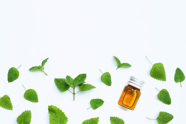 Bottiglia di olio essenziale con foglie fresche di melissa melissa