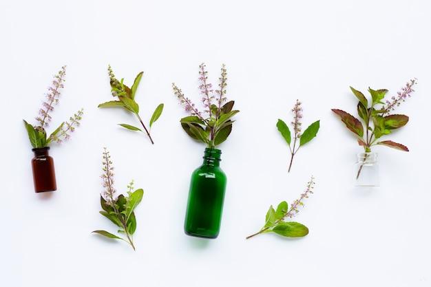 Bottiglie di olio essenziale con foglie fresche di basilico santo e fiori su sfondo bianco.