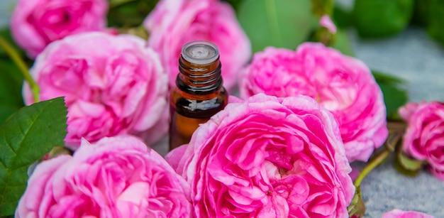 Estratto di olio essenziale di rosa tea. messa a fuoco selettiva. natura.