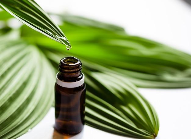 Olio essenziale o acqua che cade dalla foglia fresca alla bottiglia. essenza di erbe. medicina alternativa sana. skincare copia spazio.