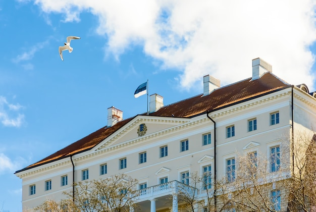 Edificio del governo estone stenbock house sulla collina di toompea nella vecchia città di tallinn, estonia. gabbiano nel cielo blu