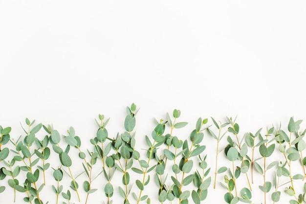 Ramo di eucalipto su sfondo bianco. disposizione piatta, vista dall'alto