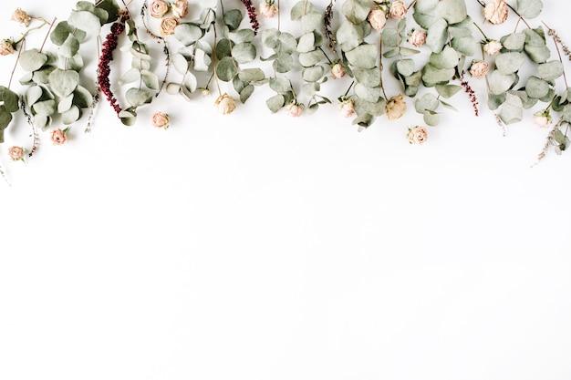 Rami di eucalipto e boccioli di rosa rosa su sfondo bianco.