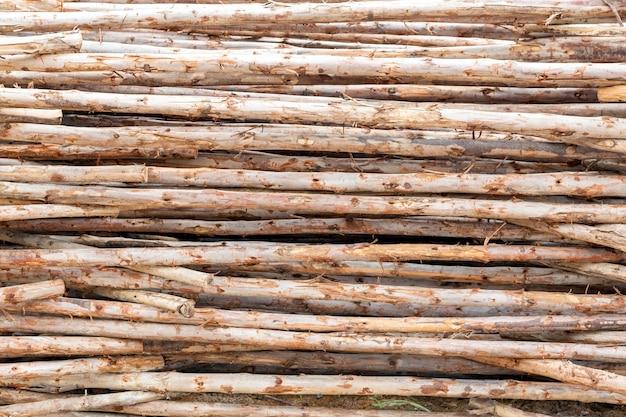 Eucalyptus t-shirt log texture di sfondo
