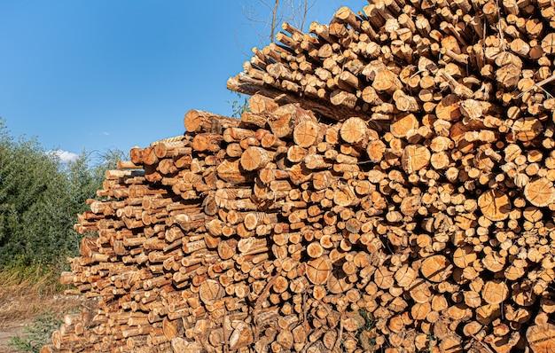 Tronchi d'albero di eucalipto potati e accatastati in un mucchio per l'uso nell'industria del legno