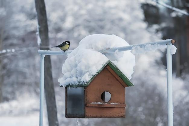Cinciarella euroasiatica che si siede vicino all'alimentatore all'aperto. cyanistes caeruleus uccello selvatico in inverno.