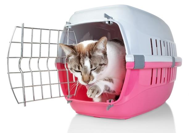 Gatto europeo in gabbia che lecca la sua zampa. su un muro bianco