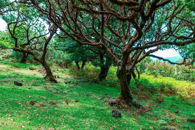 Alberi europei e foresta del portogallo.