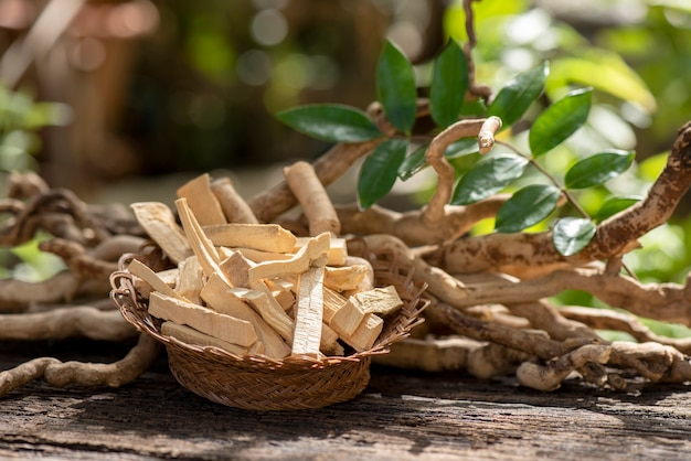 Eurycoma longifolia jack, radici essiccate e foglie verdi sulla natura.
