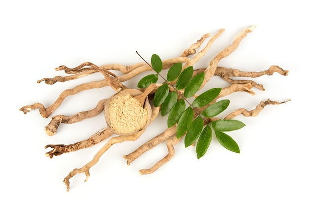 Eurycoma longifolia jack, radici essiccate, foglie verdi e polvere isolate su sfondo bianco, vista dall'alto, distesi.