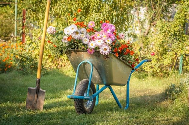 Sera dopo il lavoro nel giardino estivo. carriola con fiori recisi e vanga su erba verde.