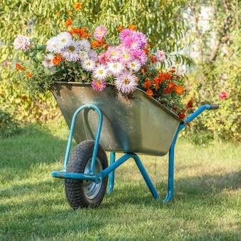 La sera dopo il lavoro in un giardino estivo. carriola con fiori sull'erba verde in uno sfondo naturale.