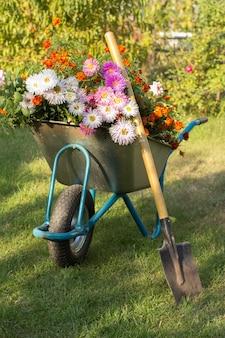 Sera dopo il lavoro nel giardino estivo. carriola con fiori e vanga su erba verde.