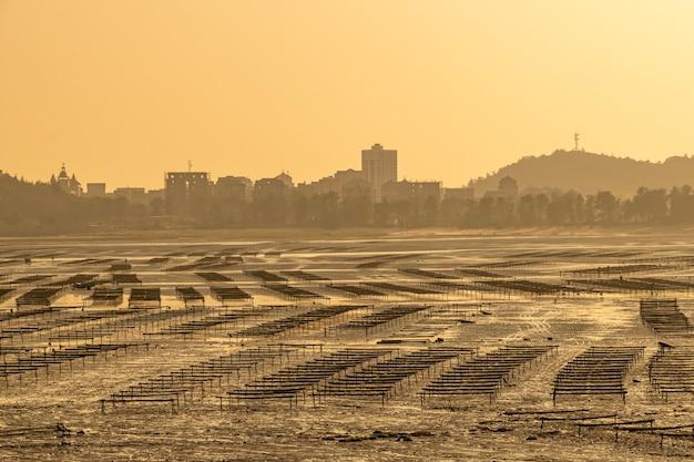 La sera, la spiaggia per l'allevamento delle alghe era dorata dal sole