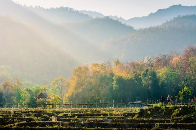 Alla sera la bellezza della campagna. riso pai, mae hong son, tailandia.