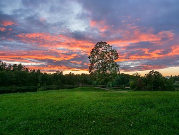Paesaggio serale con un grande albero su una verde collina