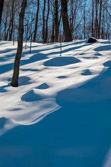 La luce della sera nella neve tra gli alberi si deforma nelle forme astratte del periodo invernale