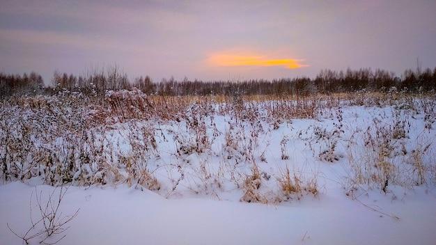 Serata nella foresta invernale innevata