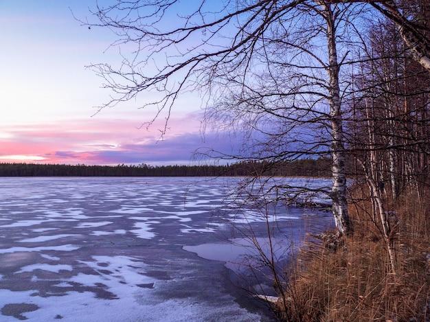 Paesaggio gelido invernale di sera con un albero di betulla sulla riva e un lago ghiacciato.