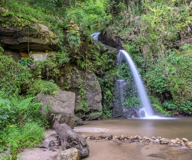 Cascata della foresta sempreverde sulla montagna di doi suthep a chiang mai, thailand