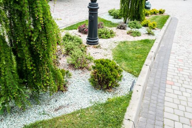 Sempreverdi con ghiaia nella decorazione dell'aiuola nel paesaggio