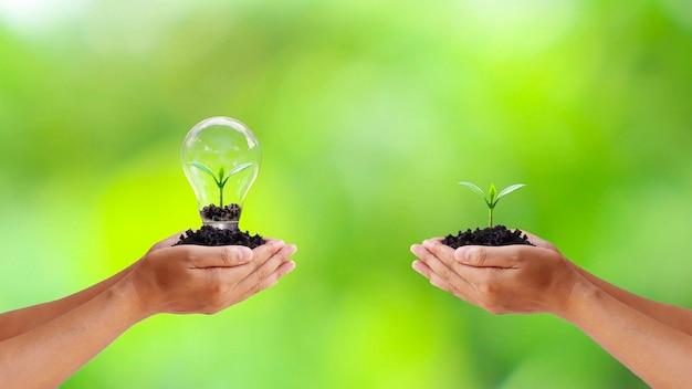 Scambio di alberi e alberi piantati in lampadine per risparmiare energia alle mani dell'uomo