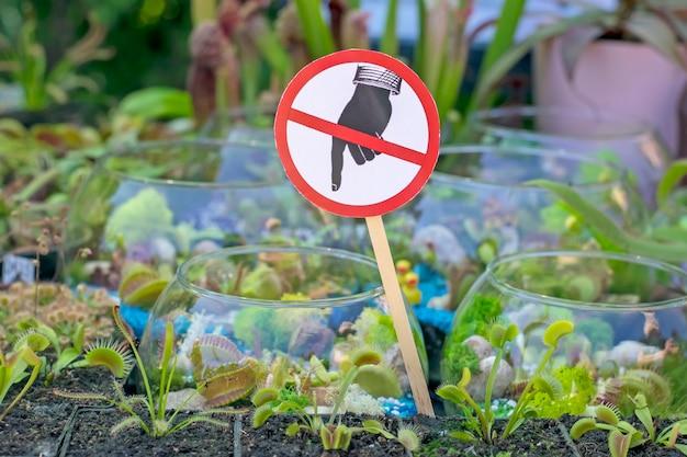 Esposizione di piante esotiche di predatori. Foto Premium