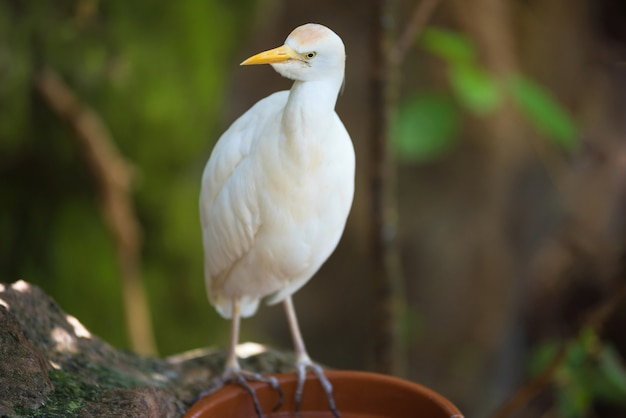 Gru esotica uccello bianco