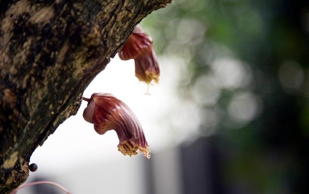 Fiore esotico sull'albero in natura concept