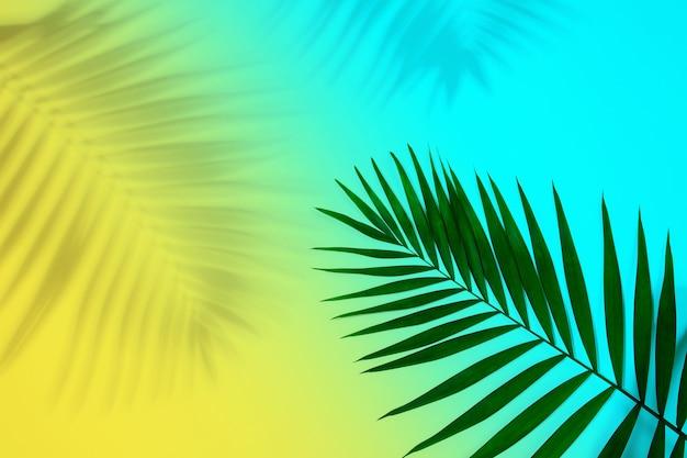 Foglia di palma tropicale verde esotica con ombra isolata su sfondo blu giallo. design per biglietti d'invito, volantini. modelli di design astratti per poster, copertine, sfondi con copyspace per il testo.