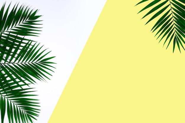 Foglie di palma tropicali verdi esotiche isolate su fondo giallo bianco. design per biglietti d'invito, volantini. modelli di design astratti per poster, copertine, sfondi con copyspace per il testo.