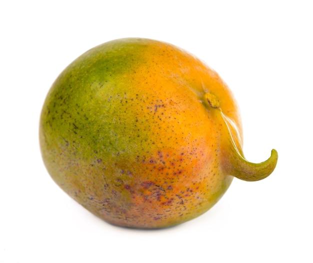 Frutti di mango succosi esotici isolati su priorità bassa bianca