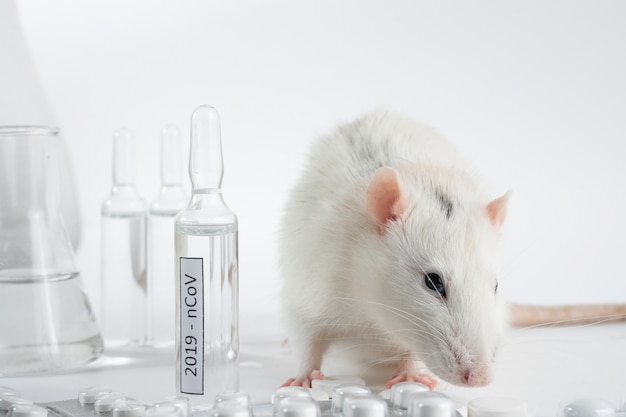Esperimento con topo da laboratorio, topo per trovare il vaccino contro il coronavirus in laboratorio. provette per il coronavirus.