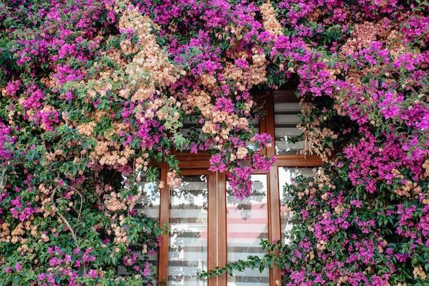L'esterno dell'edificio.una siepe di fiori adorna la finestra della casa. concetto di progettazione del paesaggio e architettura.